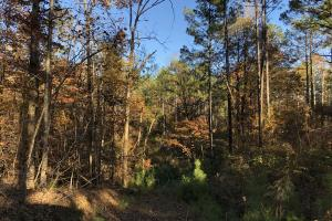 Sofkahatchee Creek Timber and Rec Tract in Elmore, AL (6 of 36)