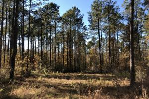 Sofkahatchee Creek Timber and Rec Tract in Elmore, AL (26 of 36)