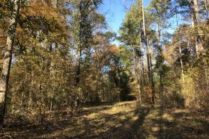Sofkahatchee Creek Timber and Rec Tract in Elmore, AL (36 of 36)