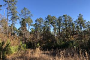 Sofkahatchee Creek Timber and Rec Tract in Elmore, AL (7 of 36)