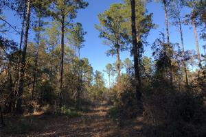 Sofkahatchee Creek Timber and Rec Tract in Elmore, AL (23 of 36)