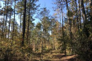 Sofkahatchee Creek Timber and Rec Tract in Elmore, AL (34 of 36)