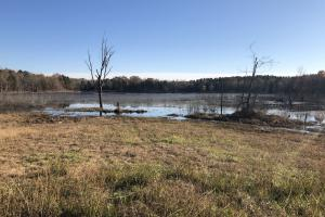 Yalobusha County Lake and Timber - Yalobusha County MS