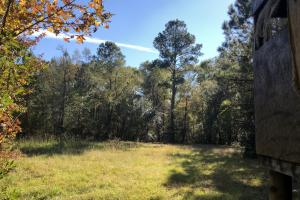 Combahee River Hunting & Recreational Property in Colleton, SC (4 of 102)
