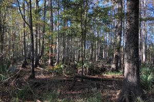 Combahee River Hunting & Recreational Property in Colleton, SC (93 of 102)