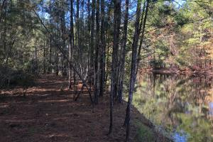 Combahee River Hunting & Recreational Property in Colleton, SC (85 of 102)