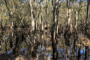 Combahee River Hunting & Recreational Property in Colleton, SC (64 of 102)