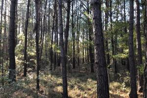 Combahee River Hunting & Recreational Property in Colleton, SC (96 of 102)