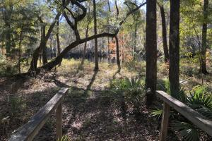 Combahee River Hunting & Recreational Property in Colleton, SC (55 of 102)