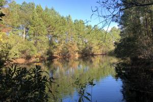 Combahee River Hunting & Recreational Property in Colleton, SC (80 of 102)