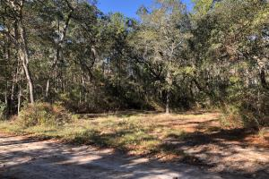 Combahee River Hunting & Recreational Property in Colleton, SC (32 of 102)
