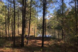 Combahee River Hunting & Recreational Property in Colleton, SC (48 of 102)