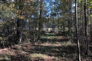 Combahee River Hunting & Recreational Property in Colleton, SC (90 of 102)
