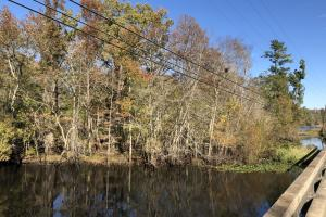 Combahee River Hunting & Recreational Property in Colleton, SC (12 of 102)