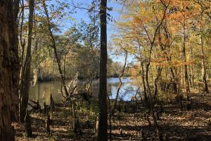 Combahee River Hunting & Recreational Property in Colleton, SC (70 of 102)