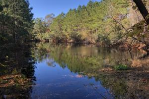 Combahee River Hunting & Recreational Property in Colleton, SC (7 of 102)