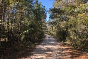 Combahee River Hunting & Recreational Property in Colleton, SC (79 of 102)