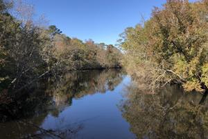 Combahee River Hunting & Recreational Property in Colleton, SC (11 of 102)