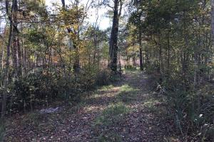 Combahee River Hunting & Recreational Property in Colleton, SC (87 of 102)