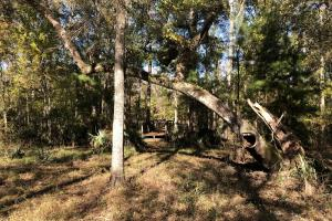 Combahee River Hunting & Recreational Property in Colleton, SC (76 of 102)