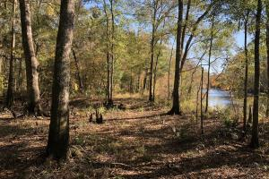 Combahee River Hunting & Recreational Property in Colleton, SC (60 of 102)