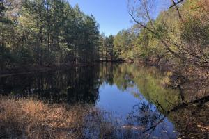 Combahee River Hunting & Recreational Property in Colleton, SC (84 of 102)