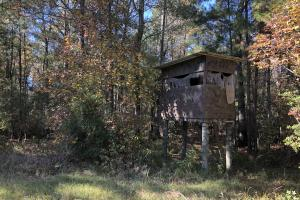 Combahee River Hunting & Recreational Property in Colleton, SC (24 of 102)