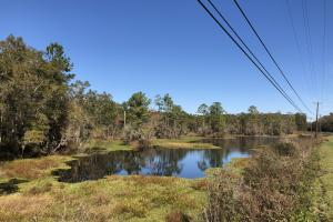 Combahee River Hunting & Recreational Property in Colleton, SC (13 of 102)