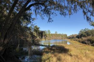 Combahee River Hunting & Recreational Property in Colleton, SC (3 of 102)