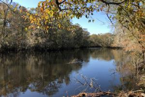 Combahee River Hunting & Recreational Property in Colleton, SC (59 of 102)