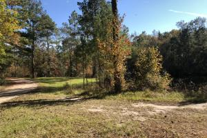 Combahee River Hunting & Recreational Property in Colleton, SC (41 of 102)