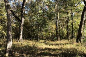 Combahee River Hunting & Recreational Property in Colleton, SC (62 of 102)