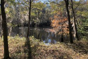 Combahee River Hunting & Recreational Property in Colleton, SC (75 of 102)