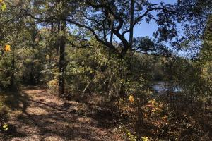 Combahee River Hunting & Recreational Property in Colleton, SC (36 of 102)