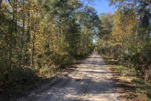 Combahee River Hunting & Recreational Property in Colleton, SC (20 of 102)