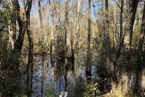 Combahee River Hunting & Recreational Property in Colleton, SC (33 of 102)
