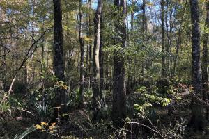 Combahee River Hunting & Recreational Property in Colleton, SC (78 of 102)