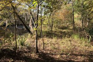 Combahee River Hunting & Recreational Property in Colleton, SC (72 of 102)
