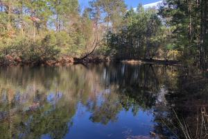 Combahee River Hunting & Recreational Property in Colleton, SC (82 of 102)