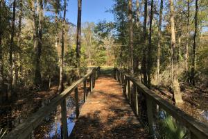 Combahee River Hunting & Recreational Property in Colleton, SC (54 of 102)