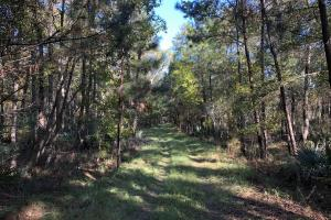 Combahee River Hunting & Recreational Property in Colleton, SC (89 of 102)