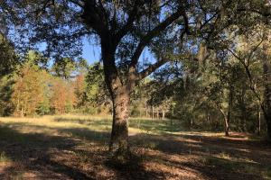 Combahee River Hunting & Recreational Property in Colleton, SC (31 of 102)