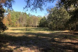 Combahee River Hunting & Recreational Property in Colleton, SC (30 of 102)