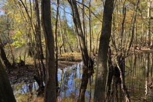 Combahee River Hunting & Recreational Property in Colleton, SC (69 of 102)