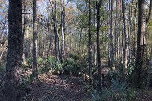 Combahee River Hunting & Recreational Property in Colleton, SC (92 of 102)