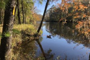 Combahee River Hunting & Recreational Property in Colleton, SC (58 of 102)