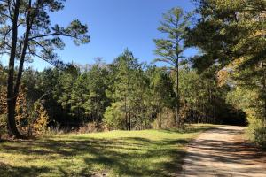 Combahee River Hunting & Recreational Property in Colleton, SC (40 of 102)