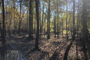 Combahee River Hunting & Recreational Property in Colleton, SC (2 of 102)