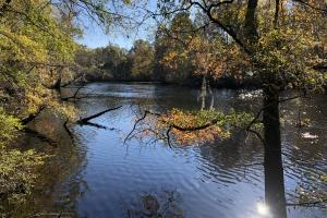 Combahee River Hunting & Recreational Property in Colleton, SC (65 of 102)