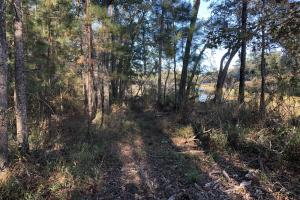 Combahee River Hunting & Recreational Property in Colleton, SC (91 of 102)